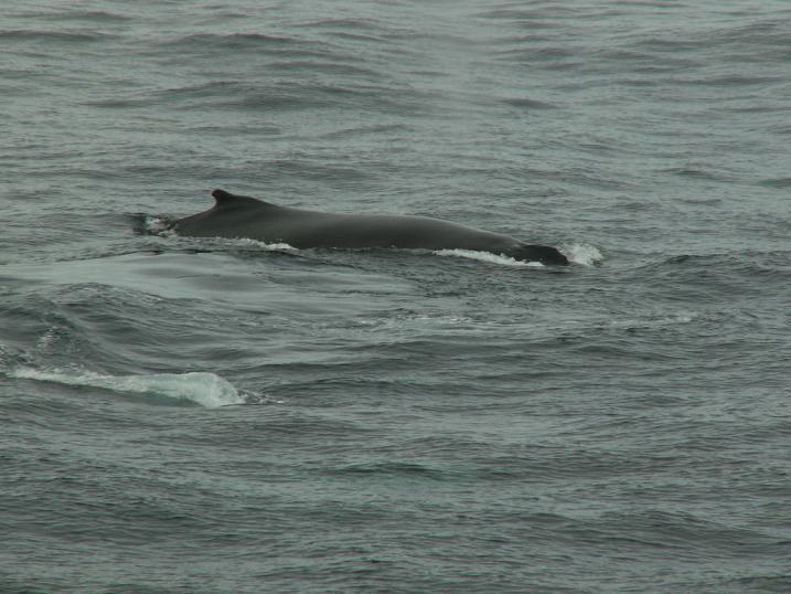 גבו של לוויתן