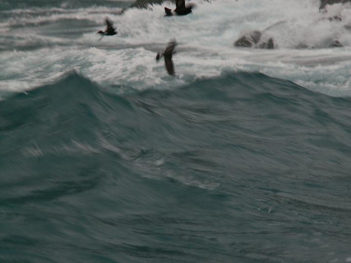 נסיון לצלם את הגלים המטורפים שהיו סביבנו. ראפטינג בים. רפיד ארקטי, אנטרקטיקה