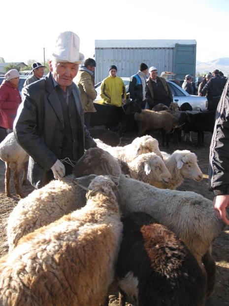 כבשים כבשים כבשים