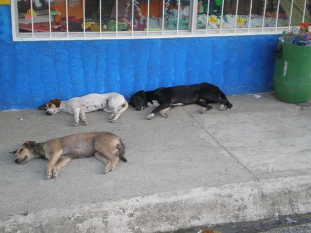 אפילו הכלבים מתים מחום כאן