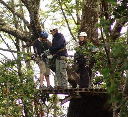 מתארגן לגלישת העצים