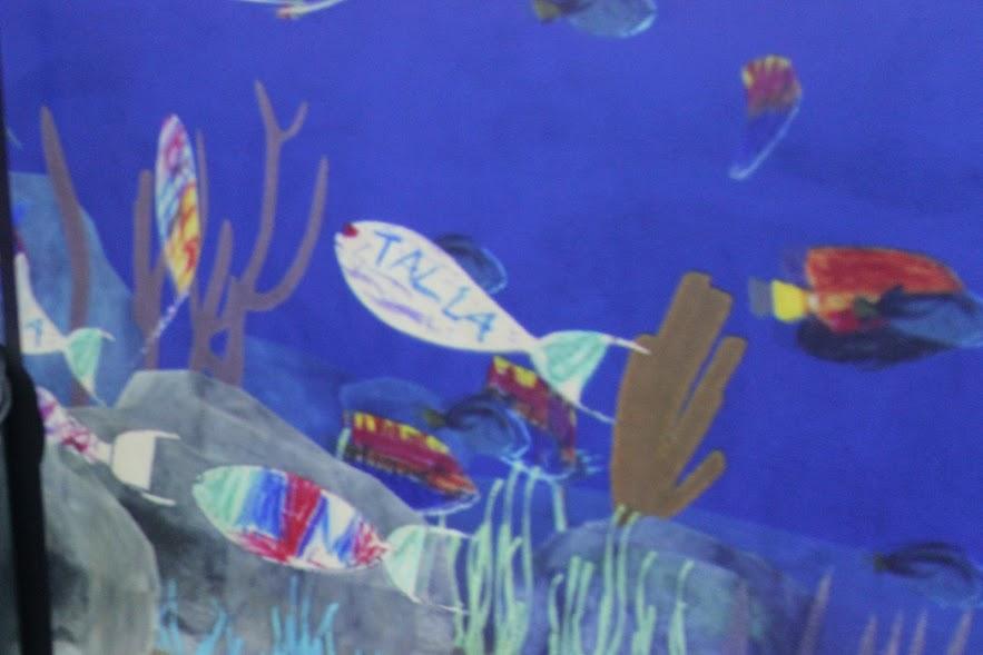 דג טליה, סידני, אוסטרליה