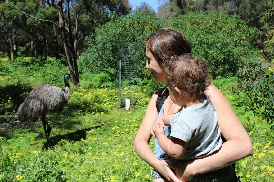אמו, אוסטרליה